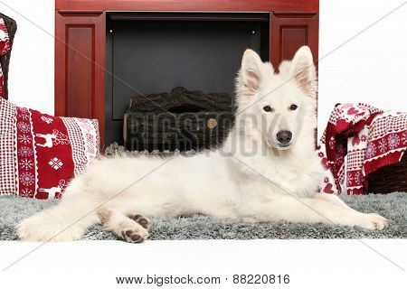 White Swiss Shepherd Dog Near The Fireplace