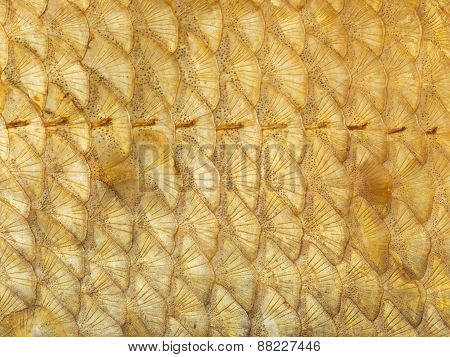 Gold Fish Scales