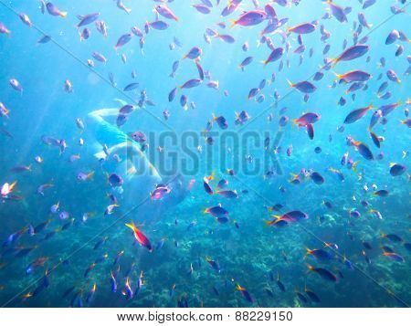 Young Man Snorkeling Among Coral Fishes