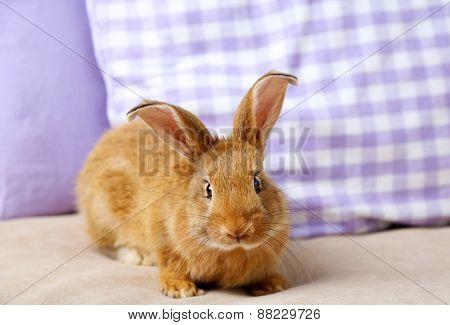 Cute rabbit on sofa, close up