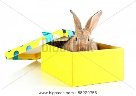 Cute rabbit in gift box, isolated on white