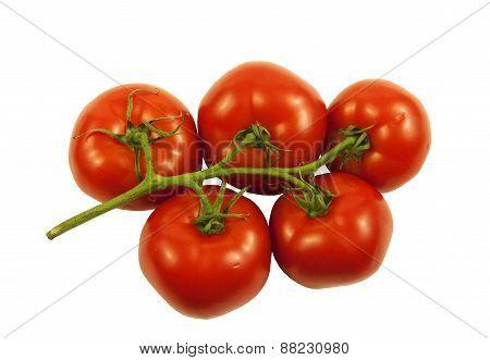 Juice vine ripe Tomatoes