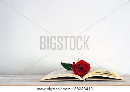 A red rose flower on an open book. White background