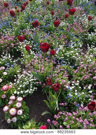 Colourful Flower Bed