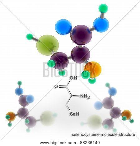 Selenocysteine Molecule Structure