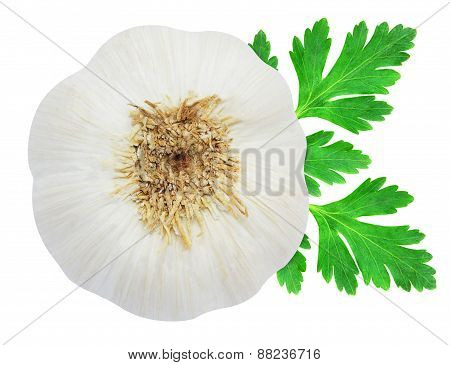 Head of garlic and parsley leaves