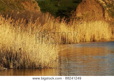 Reeds on the bank of a calm lake