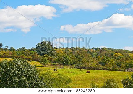 Animals on a hilly farm in Virginia during summer months.