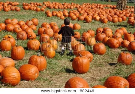 Boy In A Sea Of Pumpkins