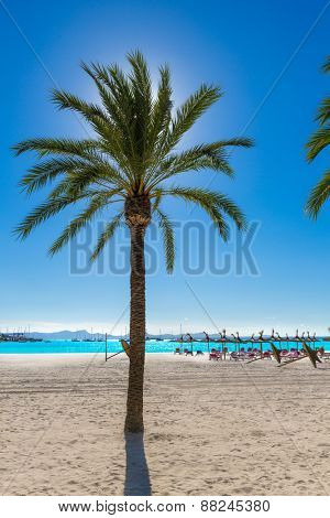 Platja de Alcudia beach Palm trees in Mallorca Majorca at Balearic islands of Spain