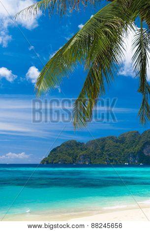 Palms Overhanging Island Lagoon