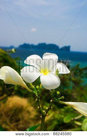 Exotic Paradise Lagoon Serenity