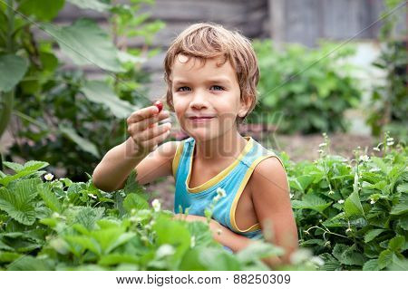 Beautiful Little Boy Collects Berries In The Garden