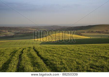 Spring Morning Over Vibrant Agricultural Landscape In Englsh Countryside