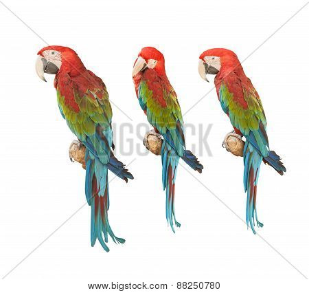 Colorful Macaw.