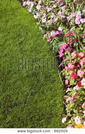 Garden Boarder