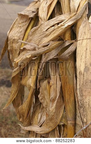 Background Of Dried Corn Husk