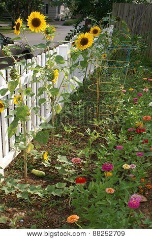 Border Garden Along Fence