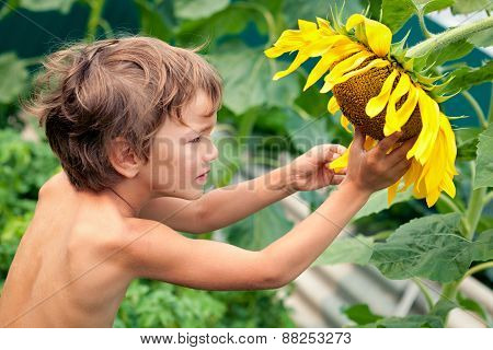 Beautiful Little Boy And Sunflower