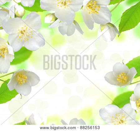 Jasmine Flower With Leaves Beautiful Background