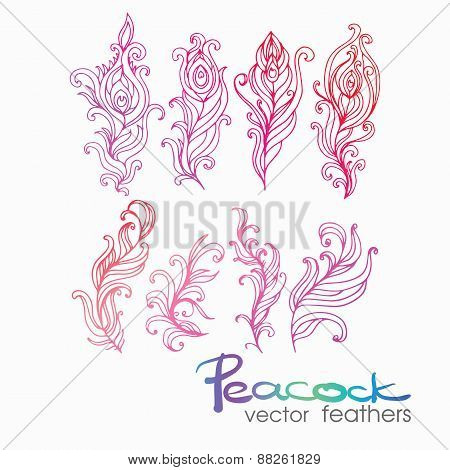 Set of Vintage Hand-Sketched Elements.Ornate peacock feathers fo
