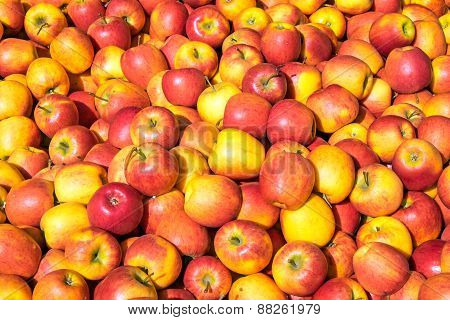 Red and yellow apples for sale