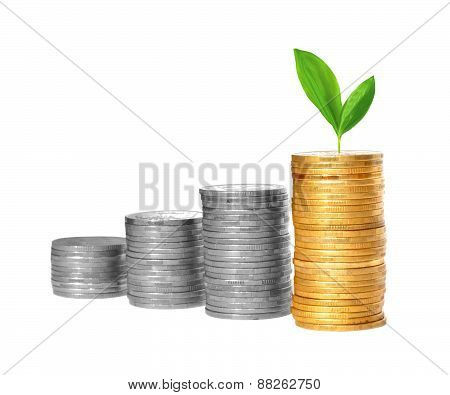 Savings, Increasing Columns Of Gold And Silver Coins And Green Plant