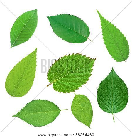 Set Of Beautiful Green Spring Leaves Isolated On White