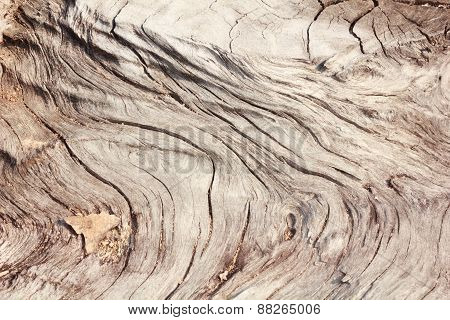 Pattern Of Wood Decay