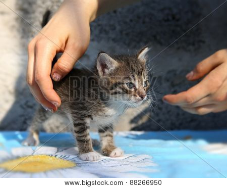 Little Homeless Kitten In The Hands