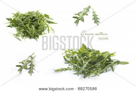 Collection of rucola on white