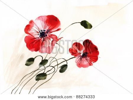 Two Color Poppies Watercolor Illustration