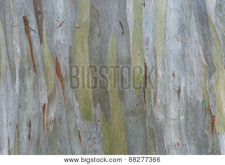 Old Tree Bark Texture For Background