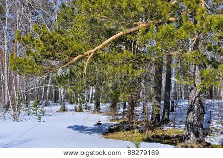 Early Spring Landscape In The Forest.