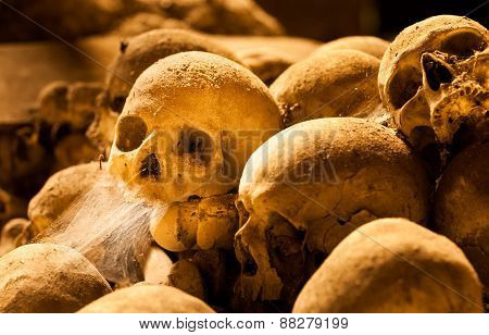 Middle Ages Skulls