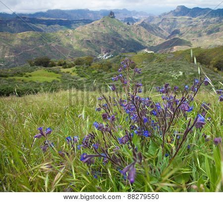 Gran Canaria, Caldera De Tejeda In Spring