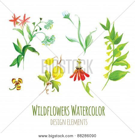 Wildflowers Watercolor Design Elements Set