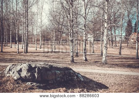 Finland. Vintage spring landscape with birch and stone.