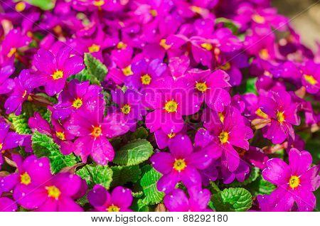 Bright Purple Garden Flowers