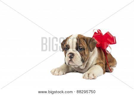 Puppy Present.