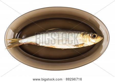 One Herring In Black Transparent Glass Plate