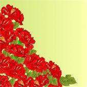 image of hibiscus flower  - Flowering shrub red  hibiscus  floral background vector illustration - JPG
