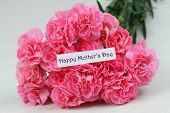 pic of carnations  - Happy Mother - JPG