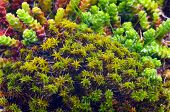 image of lichenes  - Macro shoot of green moss and lichen - JPG