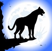 stock photo of panther  - silhouette of panther at night with the full moon - JPG