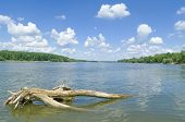 picture of driftwood  - Sunny Danube Riverscape with Driftwood and Cloudy Blue Sky - JPG