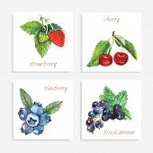 picture of black-cherry  - Berry paper cards with watercolor strawberry cherry blueberry and black currant isolated vector illustration - JPG
