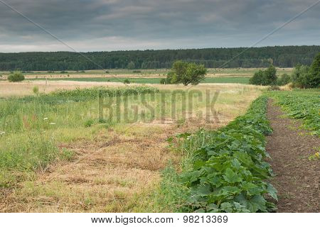 Summer landscape in the countryside