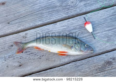One Perch And A Red Float