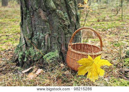 wicker basket with a maple leaf in a pine forest